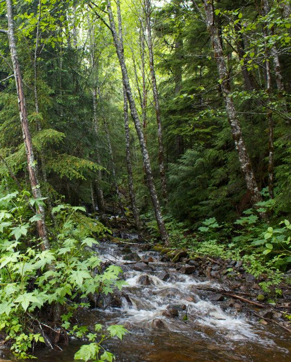 Fine Art Photography Forest Stream Photo Art Print by Photomom101, $25.00
