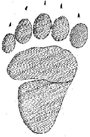 Animal Tracks - The Animal Tracks Guide y bear-tracker.com