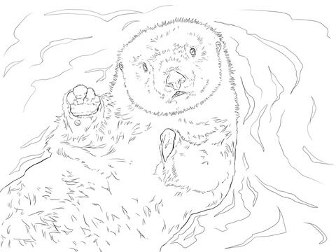 sea otter portrait coloring page