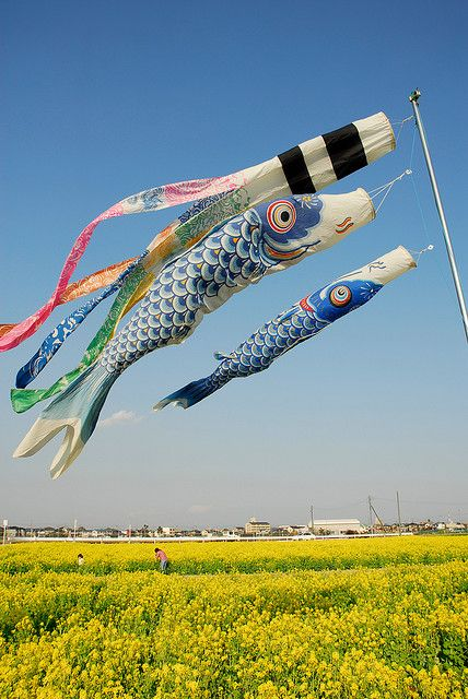 こいのぼり Koinobori (Streaming Carp Flag), Children's Day (Kodomonohi), May 5th, Japan