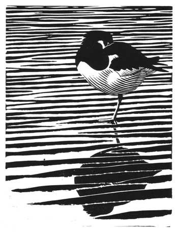 Oystercatcher by Chris Rose    The idea for this linocut evolved whilst painting a picture that featured sand ripples. I liked the challenge of paring down all the subtle tones and colours of the scene into simple black and white shapes. By the simple addition of the solid black reflection of the bird bisected by white-rimmed horizontals the impression of water is achieved. The curved lines of the sleeping oystercatcher contrasted nicely with the horizontals of the background.  SOLD OUT