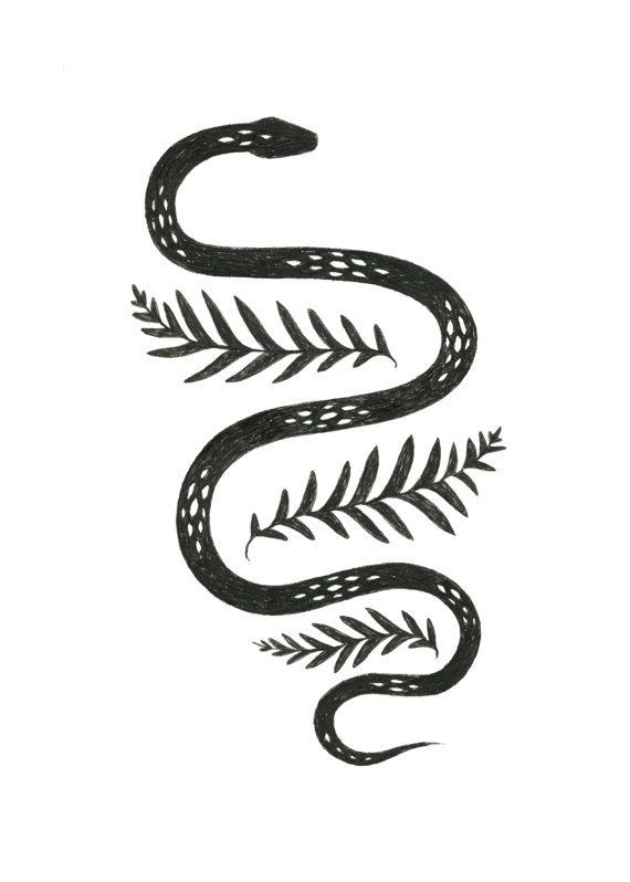 Snake & Fern illustration by Lauren Blair