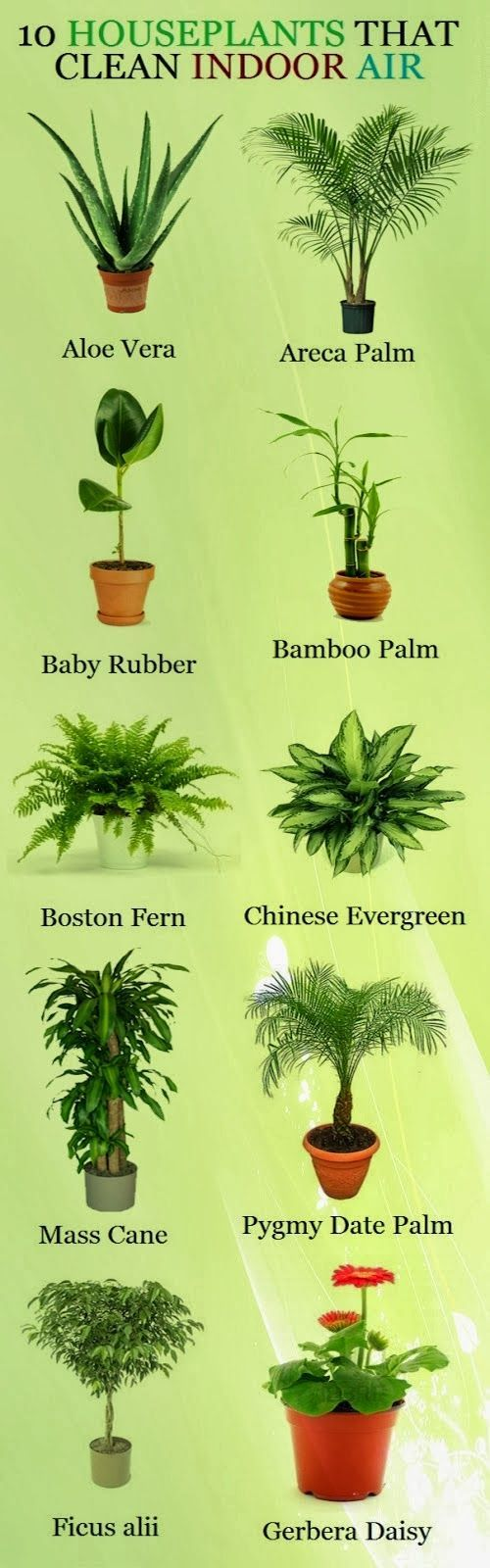 "Ten Houseplants That Clean Indoor Air.  Looking at all the lists like this, I'm thinking that probably ALL houseplants ""clean the air."""