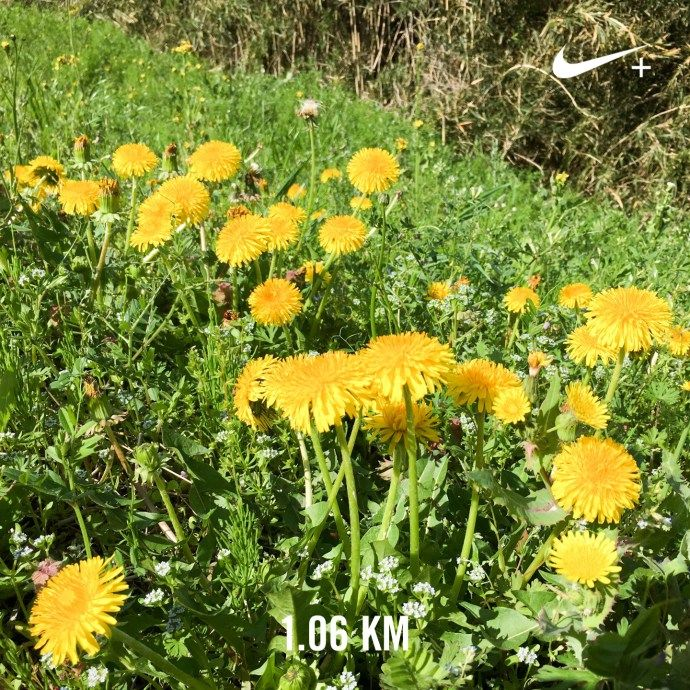 草花をながめながら〜   ランニング日記(2017.04.19)   ランニング   走る薬剤師 大徳秀幸 公式ブログ