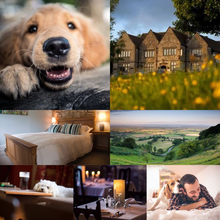 Enjoy a little bit of #cotswold bliss at The Amberley Inn with your #fourleggedfriend in tow.  #dogswelcome #welovedogs #amberley #stroud #gloucester #cotswolds #thetailwagger #dog #dogs #biz4dogs #accommodation #doglover #doglovers #dogsarefamily #fourleggedchild #lovedogs #dogslife #gloucestershire #dogwalk #dogwalking