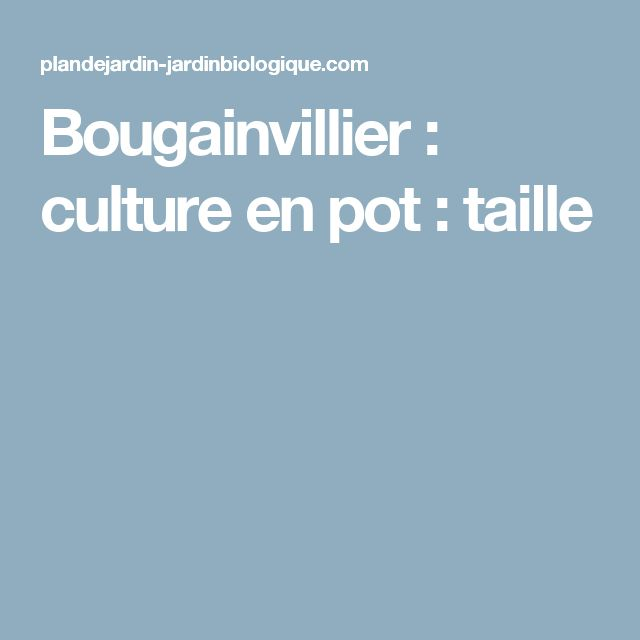 1000 id es sur le th me bougainvillier sur pinterest for Culture du bougainvillier en pot