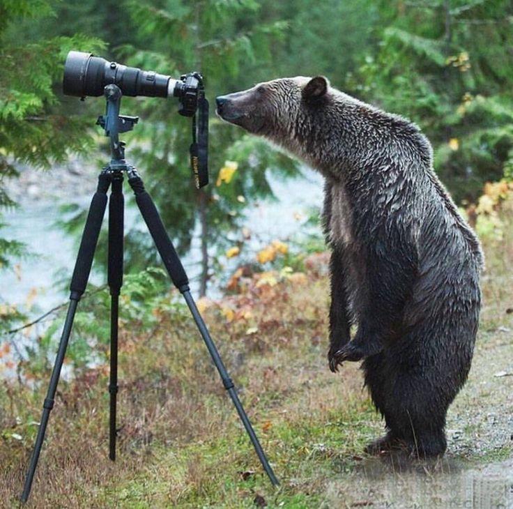 aww bear with a telescope