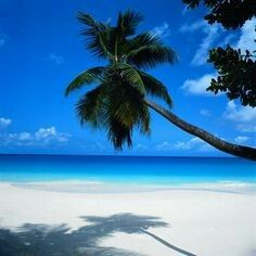 Shades of Blue • Tropical  Paradise • Ocean Tranquility