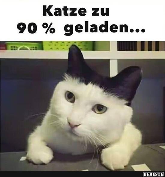 Katze zu 90% geladen.. | Lustige Bilder, Sprüche, Witze, echt lustig