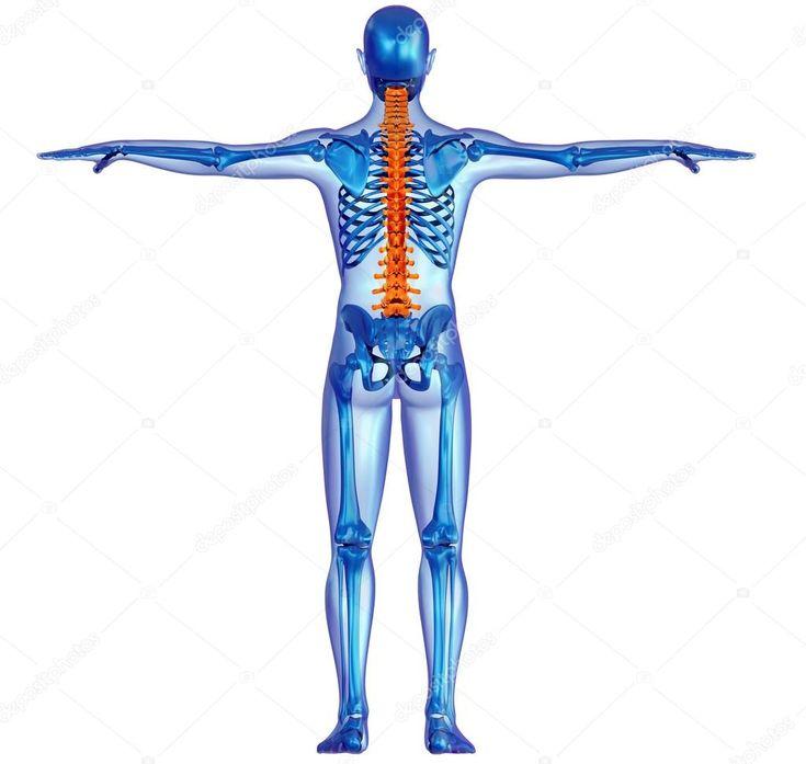 Menschlichen Körpers Skelett und Schmerzen in der Wirbelsäule — Stockbild #24971459