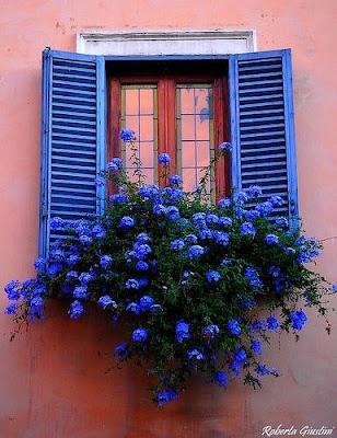 Cobalt blue! Love colors!