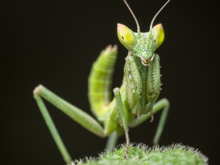 Mantis by Raúl Tijera on 500px