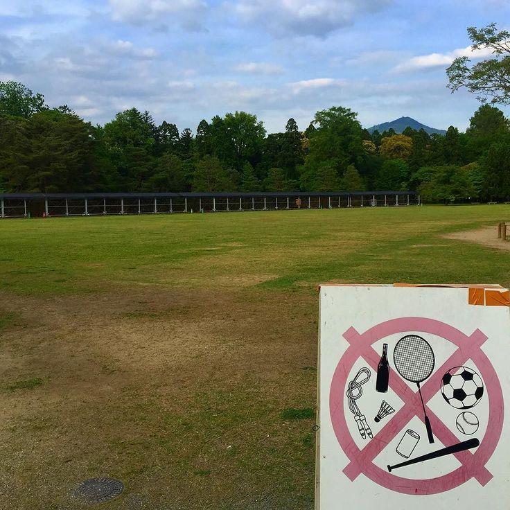 Никаких игр на игровой площадке! Полный #самоконтроль и #медитация в #Япония :) #этоЯпония #отдых #природа