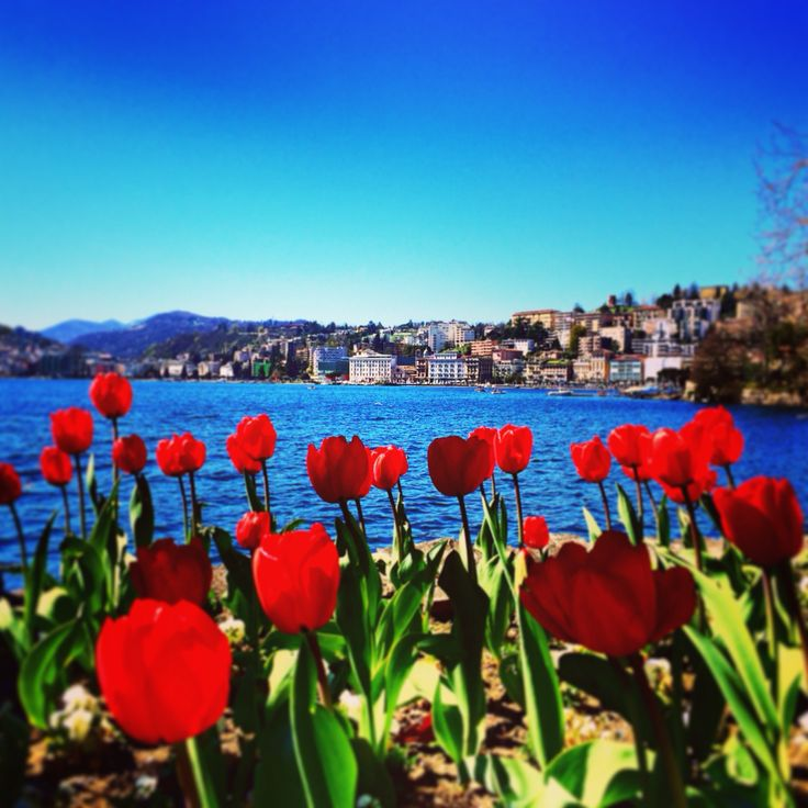 Lugano, una vista sul lago  Lugano, Switzerland