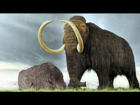 Scientists Map Woolly Mammoth Genomes, Which Could Help Bring Species Back To Life