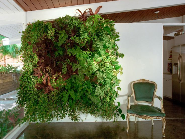 living wall ideas 96 best houseplants images on pinterest houseplants plants and
