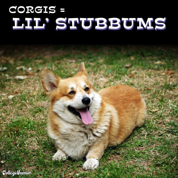 hehehehe If you go to the page there's some really great ones! 22 More Accurate Dog Breed Names.