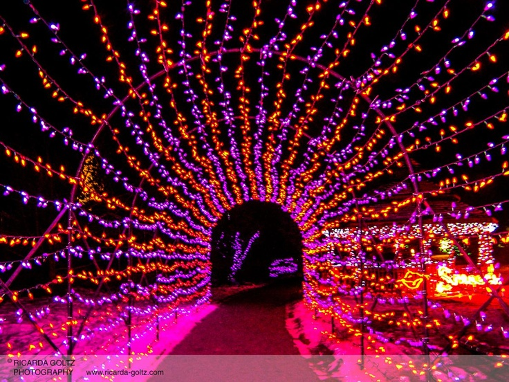 Stunning Calgary Zoo Lights.