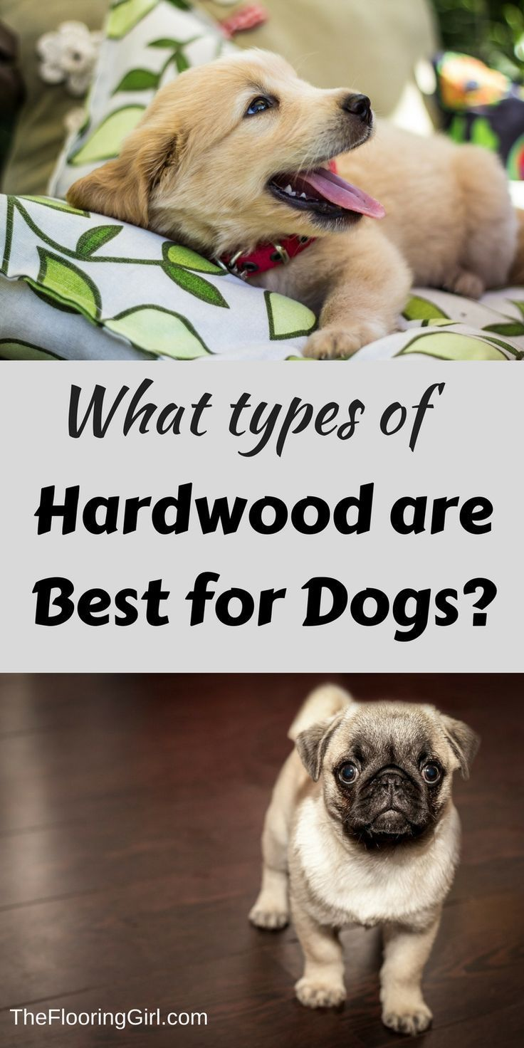 What tyes of hardwood are best for dogs.  Which hold up the best?