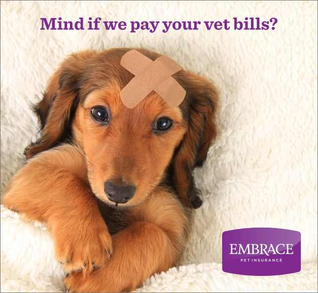 Don't let expensive vet bills come between you and the best care for your pet. Get a free quote from Embrace Pet Insurance today.