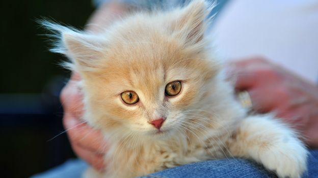 Come si formano le palle di pelo del gatto