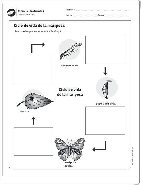 """""""Ciclo de vida de la mariposa"""" (Ficha de Ciencias Naturales de Primaria)"""