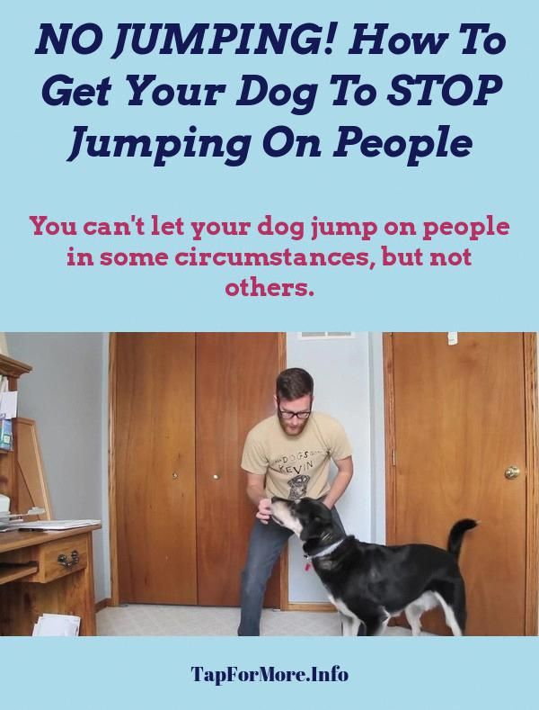 Stop Dog Jumping And Teach Dog To Fetch Check The Pic For Many