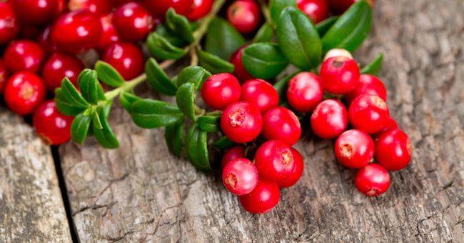 Mirtilli rossi eliminano gli effetti del cibo spazzatura