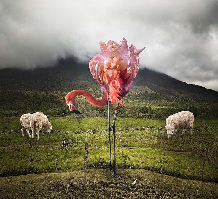 A Lost Flamingo at high elevation - © Pat Swain