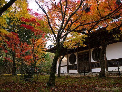錦秋の宝福寺 (Hofuku-ji Temple in autumn) #Japan #Autumn #Temple