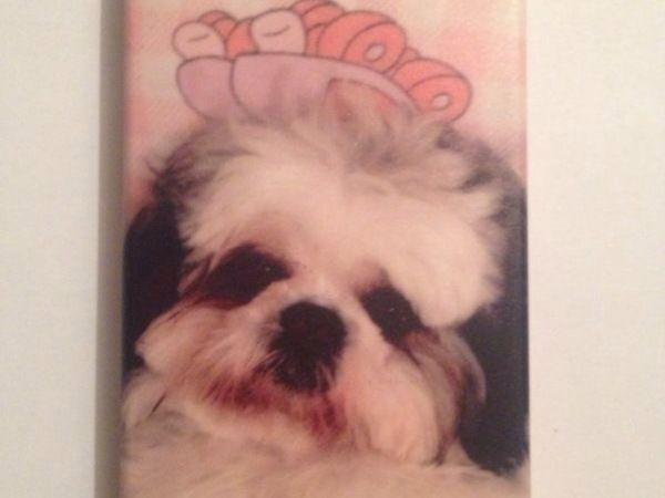 Imagen de mascota en celular