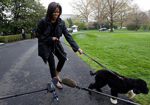 португальская водяная собака       собака Обамы Бо