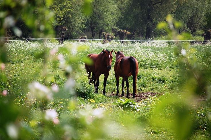 Guus: 1ste Pinksterdag 2013, Appeltjesdijk, landgoed Marienwaerdt, Beesd