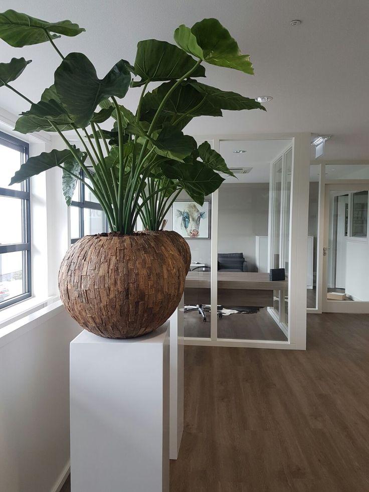 Alocasia kunstplant in Cemani bowl op hoogglans witte zuil.