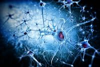 Alzheimers Tau Protein Spreads Through the Brain Via Extracellular Space