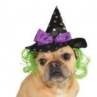 star-witch-dog-hat-7987.jpg