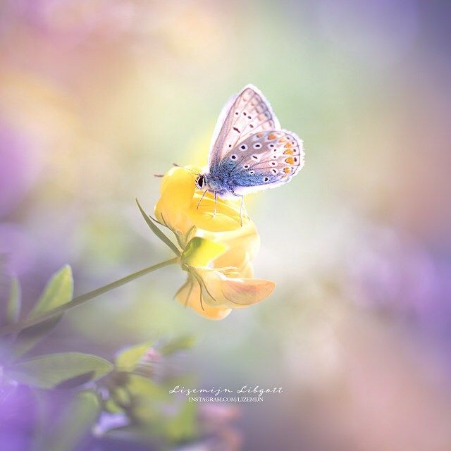 Backlit butterfly in blue, violet and orange. Photography by Lizemijn Libgott , http://www.instagram.com/lizemijn/