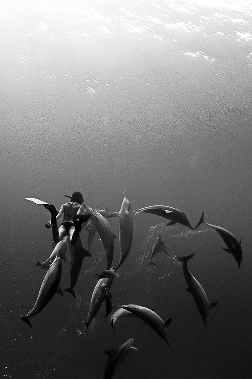 swim with dolphins (and be photographed while .. as long as the dolphins are cool with that))