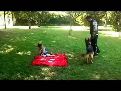 Profesyonel Köpek Eğitimi -- Club K-9 dan Profesyonel Çözümler 1 --