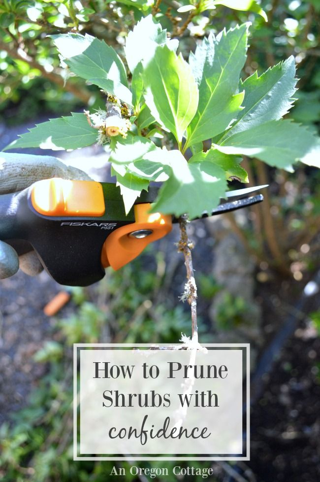 Use this simple guide to prune shrubs & help your shrubs look better and flower more. AD @FiskarsAmericas