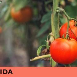 Consumir  bio  no le hace amigo del medioambiente  supone una amenaza para las selvas tropicales y más emisiones de dióxido de carbono. La salud tampoco los echará de menos