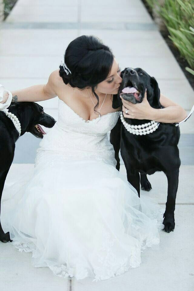 Dogs make the best bridesmaids! Collars by Beadie Babiez