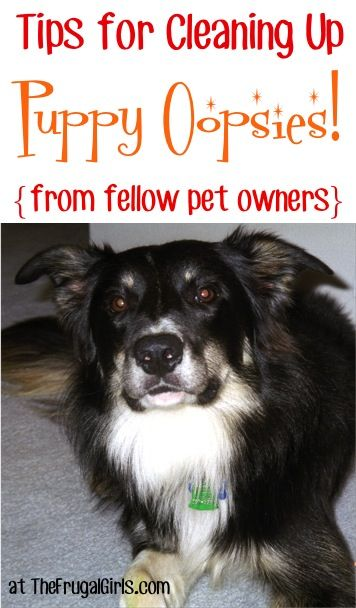 Ideas for Cleansing Up Pet Oopsies! ~ at TheFrugalGirls.com – tried and true tri…