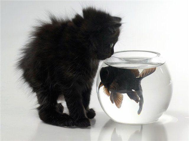 Кошки и другие смешные животные