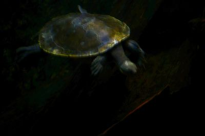 Second Swimming Turtle Art Print  #turtle #photography #reptile #animals
