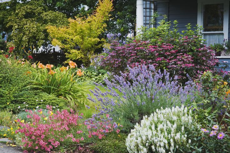 17 best images about garden plants on pinterest shade for Easy landscaping plants