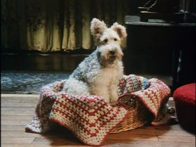 """Series was Poirot, episode name was """"Dumb Witness""""--The dog was the witness, and it's character name was Bob. The dogs actual name was """"Snubby""""."""