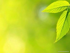 Green Leaves Background HD | HD PowerPoint Templates