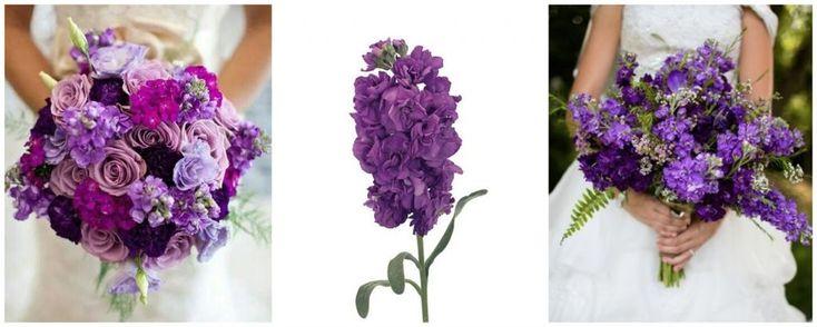 Mathiola - - flori in culoarea anului 2018: ultraviolet, buchete de mireasa roz-mov-lila