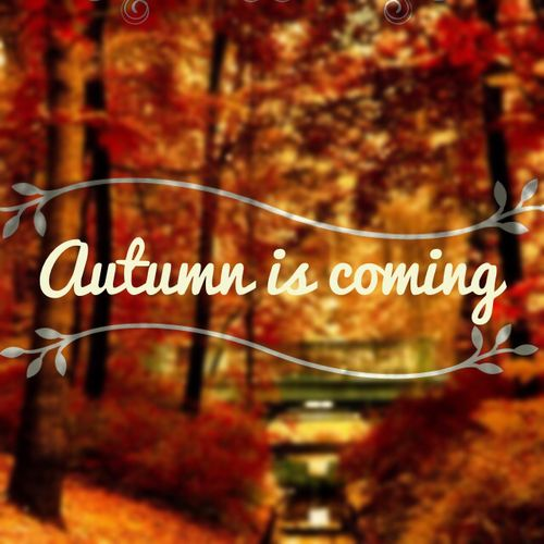 All Things Shabby and Beautiful, enchanted-october: Anticipation & Excitement.: